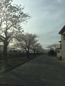 IMG_2956